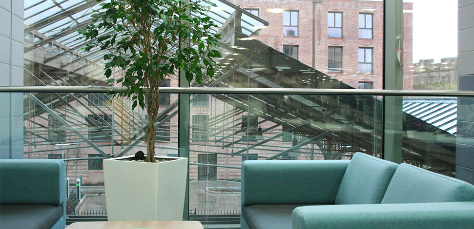 Image of indoor plant in office environment - photo for our company page - Veritau