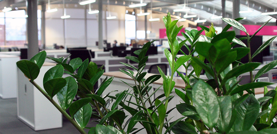 Image of green leafed plant in office - Veritau risk management services