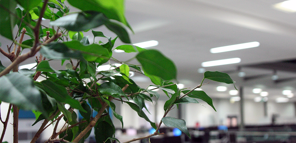 About Veritau - image of houseplant in professional offices